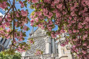 Notre Damen Katedraali keväällä