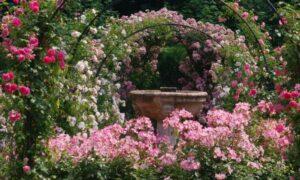 Rosegarden in the Chaalis domain, OIse, Paris region